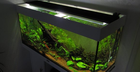 Aquarium Led Beleuchtung Selber Bauen Schullebernds Technikwelt within dimensions 1790 X 1430