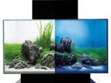 Fluval Edge 20 46 L Aquarien Set Schwarz Mit Led Beleuchtung H 15038 intended for sizing 1000 X 1000