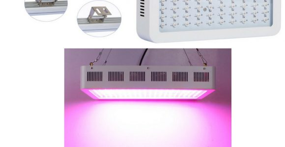 Grow Lampen Set Grow A Lamp You From Mushroom Mycelium Ecovative intended for proportions 1000 X 1000